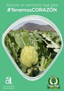 """""""Tenemos corazón"""", campaña que reconoce el trabajo en el cultivo de la alcachofa de la Vega Baja 7"""