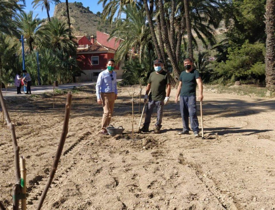 Medio Ambiente lleva a cabo nuevas plantaciones de frutales en el Palmeral 6