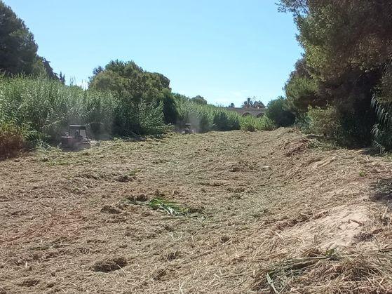 La CHS prepara los cauces de la comarca para soportar volúmenes extraordinarios de agua 6