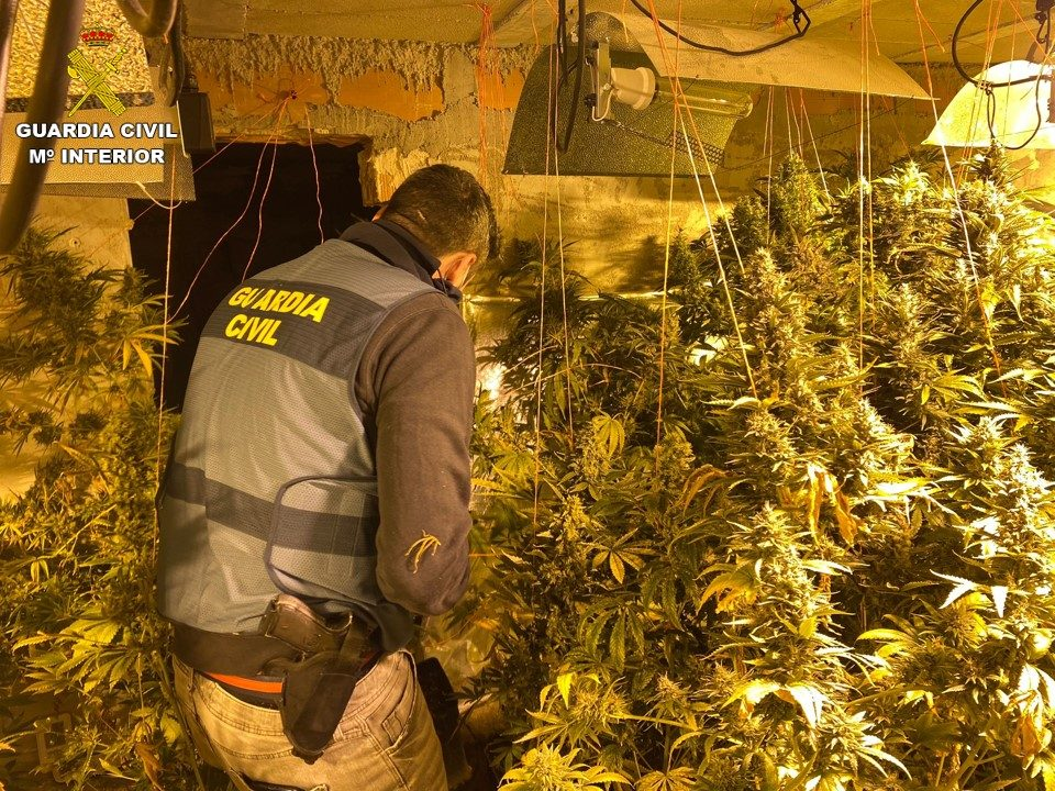 La Guardia Civil desmantela una plantación de marihuana en Rojales 6
