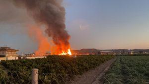 Un incendio arrasa 5.000 m2 de huerto de palmeras en Bigastro 7