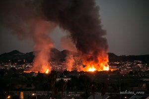 Un incendio arrasa 5.000 m2 de huerto de palmeras en Bigastro 9