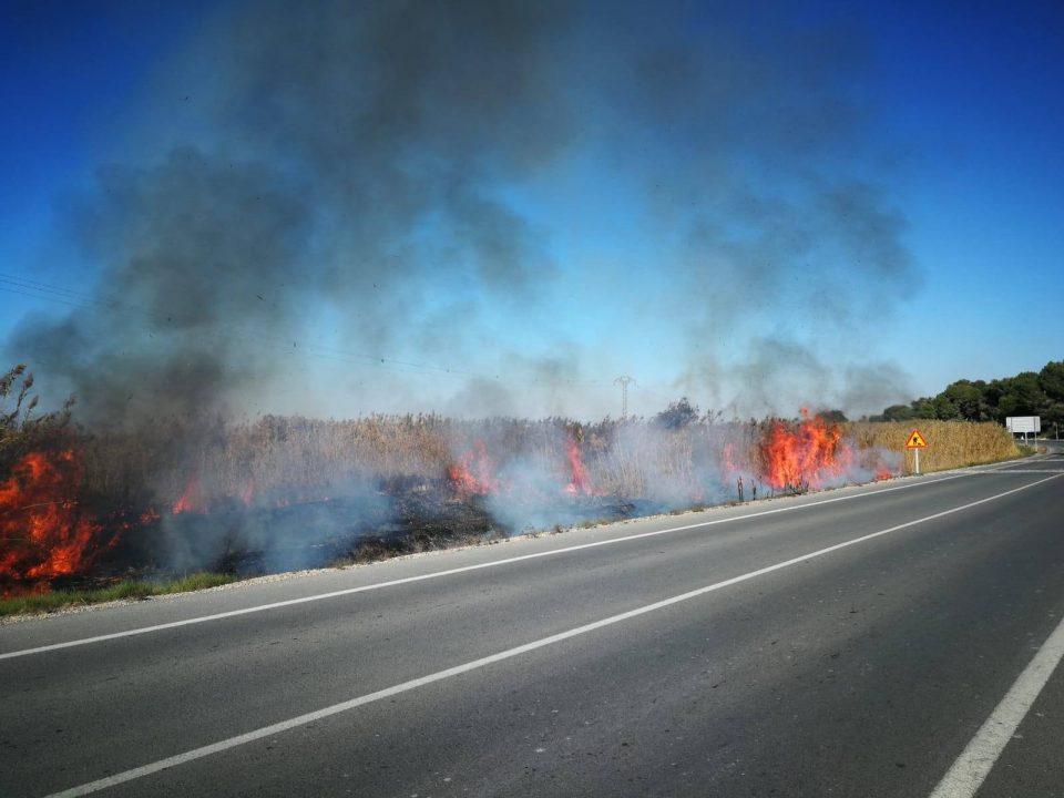 Esto es lo que pasa cuando lanzas una colilla: 200m2 incendiados en San Fulgencio 6