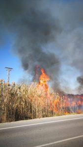 Esto es lo que pasa cuando lanzas una colilla: 200m2 incendiados en San Fulgencio 9
