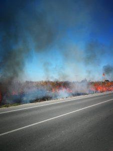 Esto es lo que pasa cuando lanzas una colilla: 200m2 incendiados en San Fulgencio 10