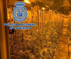 Detenidos en Orihuela por la plantación de marihuana 7