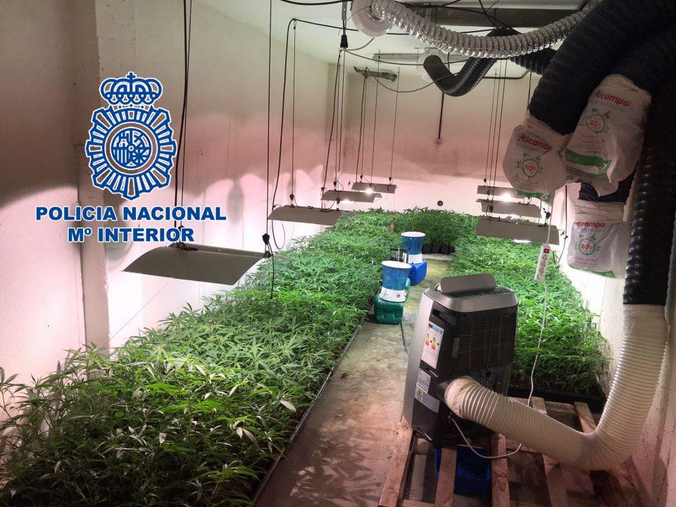 Detenidos en Orihuela por la plantación de marihuana 6