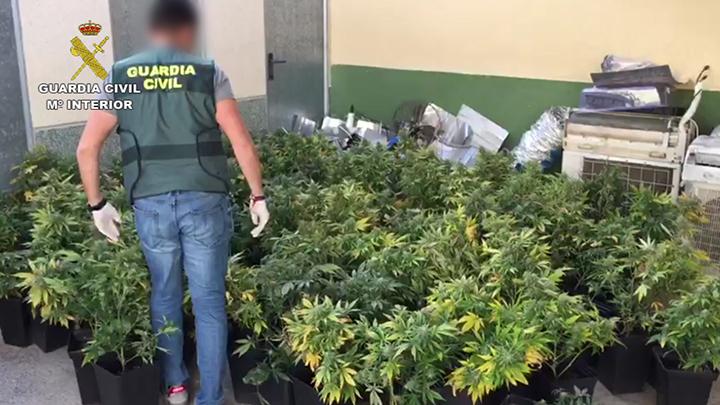 Desarticulan un clan familiar dedicado al cultivo y a la venta de droga 6