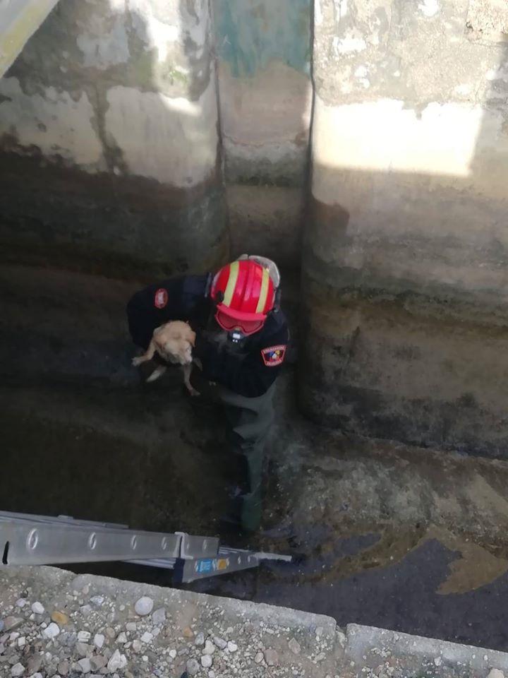 Protección Civil rescata a un perro atrapado en una acequia de Desamparados 6