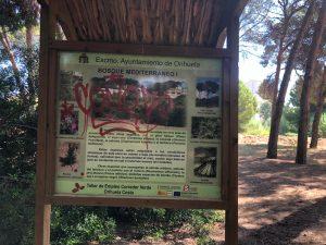 El PSOE de Orihuela reclama limpieza y mantenimiento en la pinada de Campoamor 7