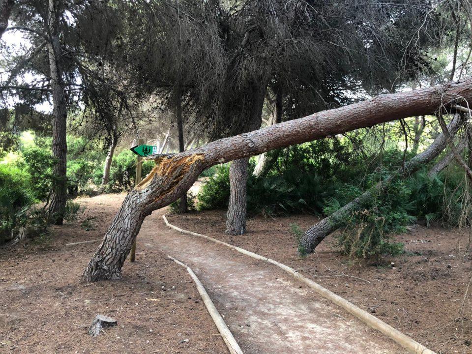 El PSOE de Orihuela reclama limpieza y mantenimiento en la pinada de Campoamor 6