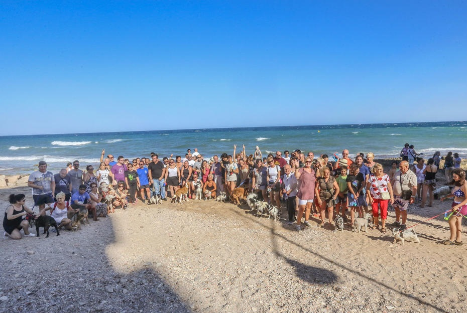 Los Verdes de Torrevieja recurrirán al Decreto que elimina las playas caninas 6