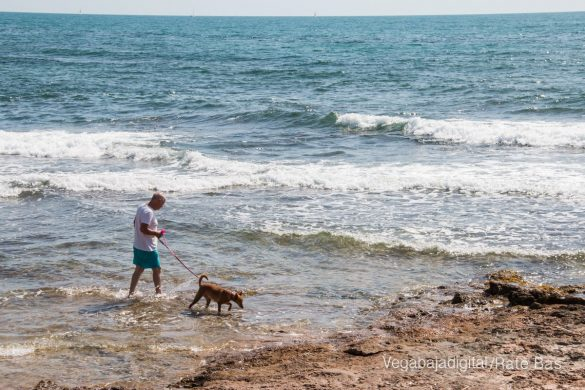 Así es la nueva playa canina de Torrevieja 14