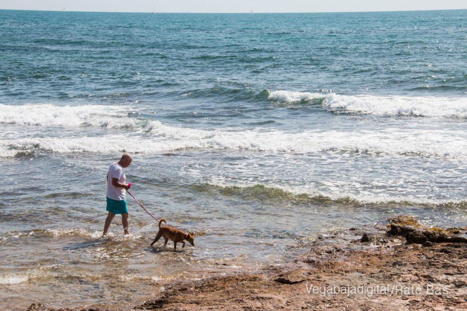 Casi 700 firmantes piden el regreso a la anterior playa canina de Torrevieja 6