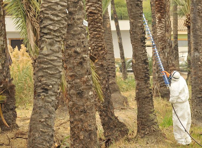 Reanudan los trabajos de poda y tratamiento fitosanitario en El Palmeral 6