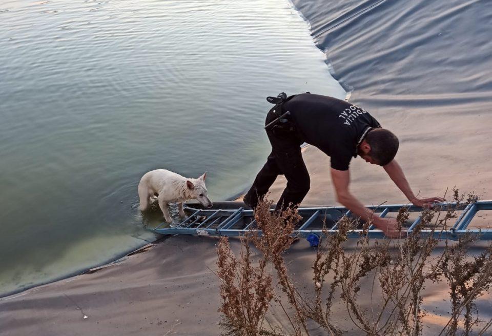 La Policía Local de Orihuela, dispuesta a mojarse por rescatar a dos perros 6