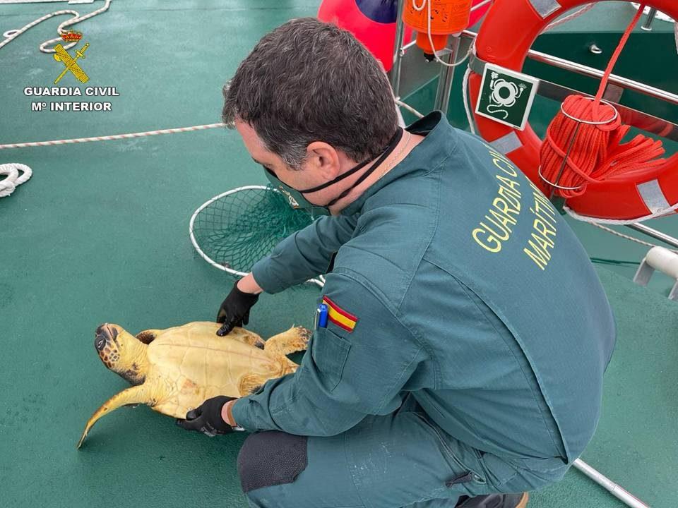 La Guardia Civil rescata una Tortuga Boba en Pilar de la Horadada 6