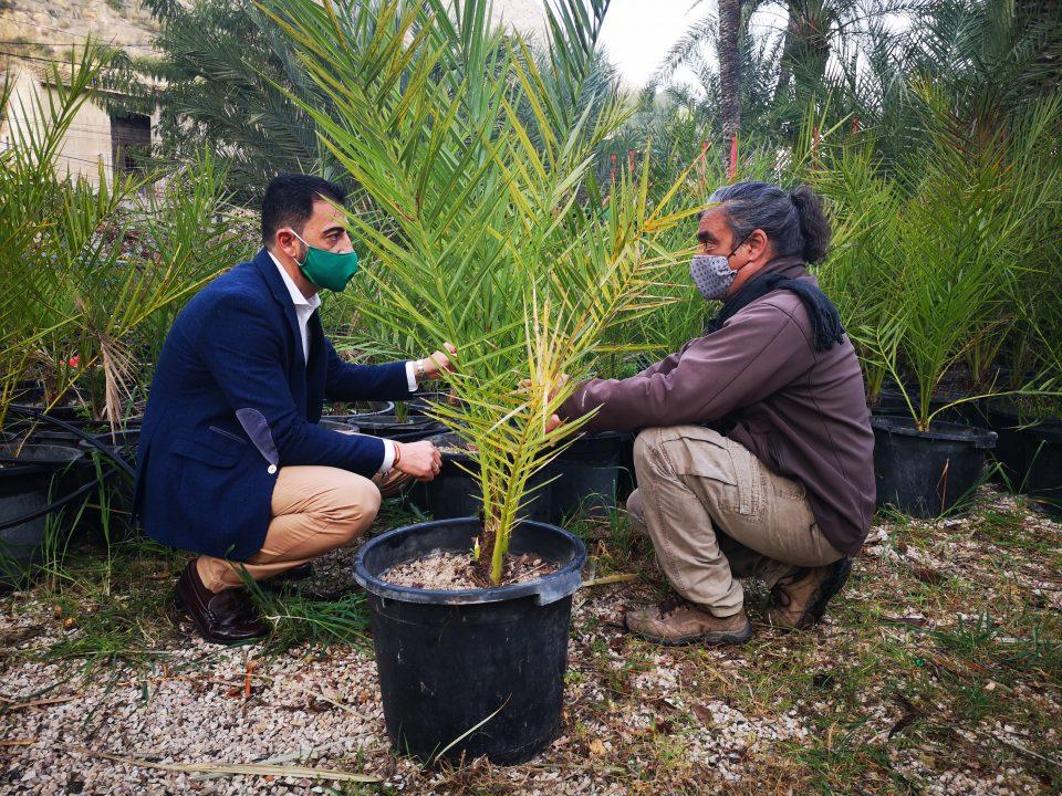 Medio Ambiente organiza un programa para implicar a los escolares en el Palmeral de Orihuela 6